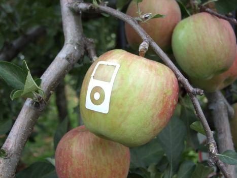 Maça etiquetada com o icone do iPod e mais um pouco de sol...