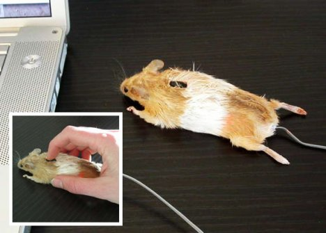 mouserato